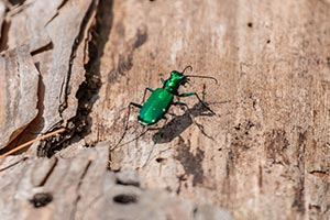 Executive Outdoor Living - Ash Borer Treatment on Executive Outdoor Living id=37745